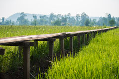 Amanecer soleado en un campo en Tailandia fotografía de archivo libre de regalías