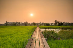 Amanecer soleado en un campo en Tailandia fotos de archivo libres de regalías