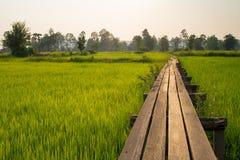 Amanecer soleado en un campo en Tailandia Imagenes de archivo
