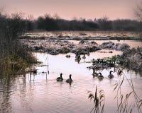 Amanhecer em Frosty River Bank Fotografia de Stock Royalty Free