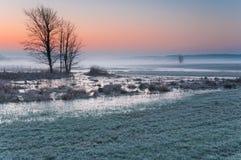 Amanhecer gelado sobre um prado enevoado e pantanoso com água congelada e uma árvore só Foto de Stock