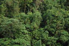 Amanhecer na selva malaia Imagem de Stock Royalty Free