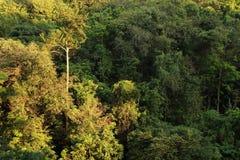 Amanhecer na selva malaia Fotografia de Stock