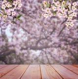 Amanhecer no pomar de cereja Cereja de florescência Cherry Blossoms imagem de stock