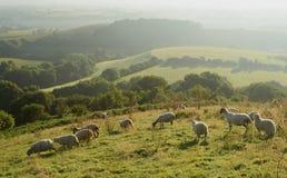 Amanhecer sobre o vale de Marshwood Fotografia de Stock Royalty Free