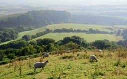 Amanhecer sobre o vale de Marshwood Imagem de Stock Royalty Free