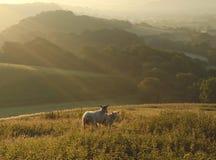 Amanhecer sobre o vale de Marshwood Fotos de Stock