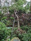 Łamani drzewa po silnej burzy Zdjęcie Royalty Free