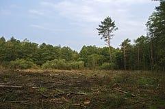 Łamani drzewa w lesie po silnych wiatrów zdjęcia stock