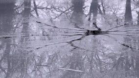 Łamani lodowi recflecting drzewa Obrazy Royalty Free