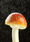 amanita βροχή muscaria Στοκ Φωτογραφία