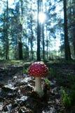 Amanita μανιτάρι στο δάσος backlight κάθετος στοκ εικόνες