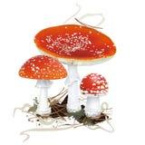 amanita μανιτάρι muscaria κινδύνου φθινοπώρου eps 8 αγαρικών μανιτάρι μυγών πέρα από το διανυσματικό λευκό διάνυσμα Στοκ Εικόνα