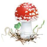 amanita μανιτάρι muscaria κινδύνου φθινοπώρου eps 8 αγαρικών μανιτάρι μυγών πέρα από το διανυσματικό λευκό διάνυσμα Στοκ φωτογραφίες με δικαίωμα ελεύθερης χρήσης