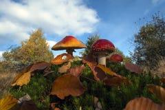 Amanita μανιτάρι muscaria Στοκ εικόνες με δικαίωμα ελεύθερης χρήσης