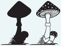 Amanita μανιταριών με τη χλόη Στοκ εικόνα με δικαίωμα ελεύθερης χρήσης