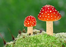 Amanita Fly Agaric Mushrooms Stock Images