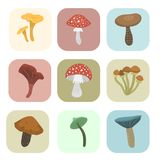 Amanita fly agaric toadstool mushrooms cards fungus different art style design vector illustration red hat Stock Photos