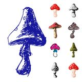 Amanita fly agaric toadstool mushrooms fungus different art style  Stock Image