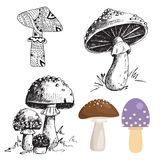 Amanita fly agaric toadstool mushrooms fungus different art style design vector illustration red hat. On white background. Harvest cooking healthy vegetarian Royalty Free Stock Images