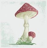 Amanita. Grunge style. Vector illustration stock illustration