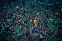 Amanita i Forest Filtered Royaltyfri Foto