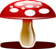 Amanita Muscaria, Fly Agaric Stock Images
