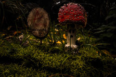 Amanita muscaria fly agaric Royalty Free Stock Image