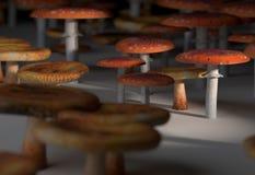 Amanita muscaria i paxil pieczarki ustalona 3d ilustracja Zdjęcie Stock