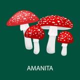 Amanita muscaria, jadowita pieczarka w lasowy Dziki Furażować, wektor odizolowywać jadalne naturalne pieczarki w natura secie Obrazy Royalty Free