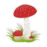 Amanita muscaria, poisonous mushrooms. Colorful cartoon illustration Royalty Free Stock Photography