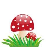 Amanita mushroom Stock Photography