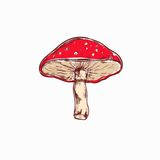 Amanita. Mushroom. Vector hand drawn. Colored illustration Stock Photos