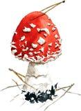 Amanita,poisonous mushroom Royalty Free Stock Image