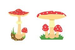 Amanita poisonous mushroom Stock Photo