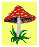 Amanita poisonous mushroom Royalty Free Stock Photography