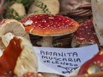 Amanite muscle fungi. In the basket Stock Photos