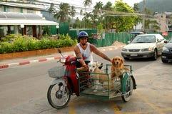 Amant thaïlandais Phuket de chien Photo libre de droits