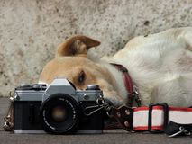 Amante Analog di fotographia immagini stock libere da diritti