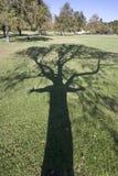 Amante da árvore fotografia de stock royalty free