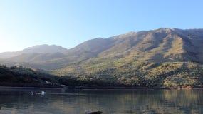 Amante da liberdade do ganso de animais selvagens no lago nature Fotografia de Stock Royalty Free