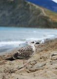 Amante de la playa imagen de archivo libre de regalías