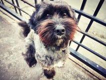 Amante dei cani Immagini Stock Libere da Diritti