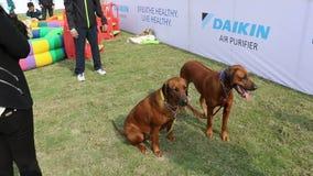 Amante dei cani che celebra & che gode dell'animale domestico Fed Fair video d archivio