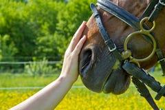 Amante del animal doméstico - confianza Imagenes de archivo