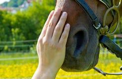 Amante del animal doméstico - confianza Fotografía de archivo