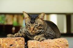 Amante del gatto, gatto, tema animale Immagini Stock
