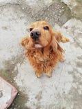 Amante del perro Imagen de archivo