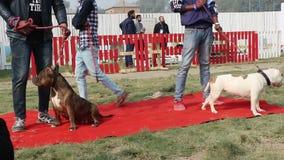 Amante del perro que celebra y que goza del animal doméstico Fed Fair almacen de video