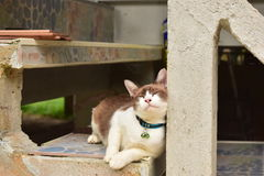 Amante do gato fotos de stock